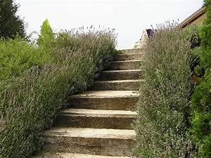 Comment Faire Des Marches Dans Un Talus : afficher l 39 image d 39 origine jardinage pinterest talus escalier ext rieur et escaliers ~ Melissatoandfro.com Idées de Décoration