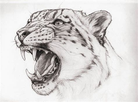 snow leopard tattoos animal drawings snow leopard