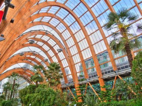 Sheffield Winter Garden-all You Need To Know Before You