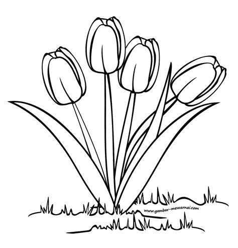 24 contoh gambar sketsa alat musik terlengkap duniasket. Gambar Bunga Tulip Yang Mudah Digambar Dan Berwarna