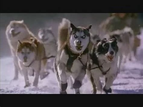 aventuras en alaska snow dogs trailer youtube