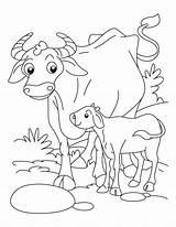 Coloring Buffalo Animals Calf Babies Drawing Animal Cow Cape Printable Az Wild Bestcoloringpages Adult Getdrawings Getcolorings Meta Buffalos Popular sketch template