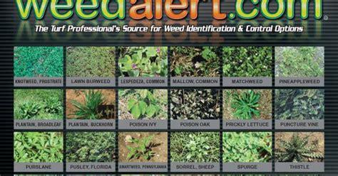 identify  weeds   appearance  region httpwwwweedalertcomindexphp