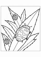 Coloring Insects Pages Ladybug Children Flying Cliparts Drawing Squirrel Ladybugs Printable Theme Clipart Library Getcolorings Justcolor Terrific Animal Amazing Favorites sketch template