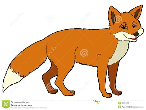 cartoon animal fox illustration   children stock