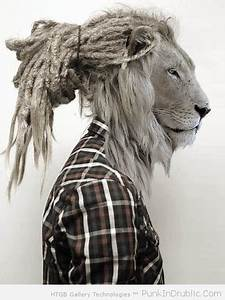 lion with dreads   Tumblr