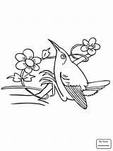 Hummingbird Hummingbirds Drawing Flowers Step Coloring Pages Bee Getdrawings Birds sketch template