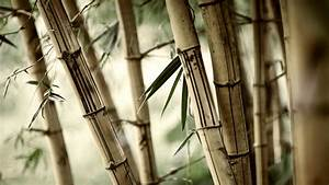 Bamboo New HD Wallpapers 2015 (High Quality)