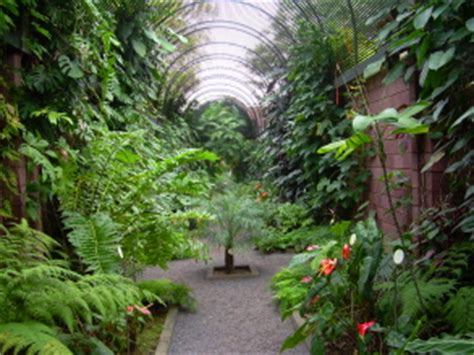Botanischer Garten Basel Anfahrt by Botanischer Garten De La Teneriffa