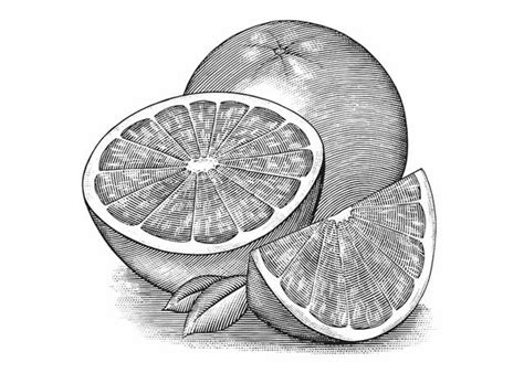 Steven Noble Illustrations Grapefruit