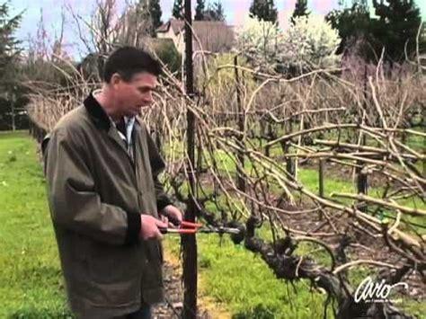 pruning grape vines fall pruning grape vines gardening pinterest