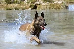 Urlaub Mit Hund Am Meer Italien : einen urlaub mit hund am meer genie en ~ Kayakingforconservation.com Haus und Dekorationen