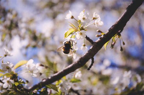 Tipps Wie Länger Kann by Wie Den Bienen Helfen Kann Und Wertvolle Tipps F 252 R