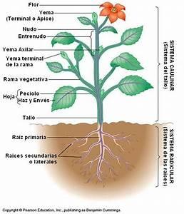Manipulacion E Higiene De Alimentos  Hortalizas  Verduras