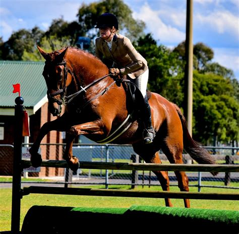 andalusian spanish dressage eventing horses jumping horse horsezone nsw showjumping