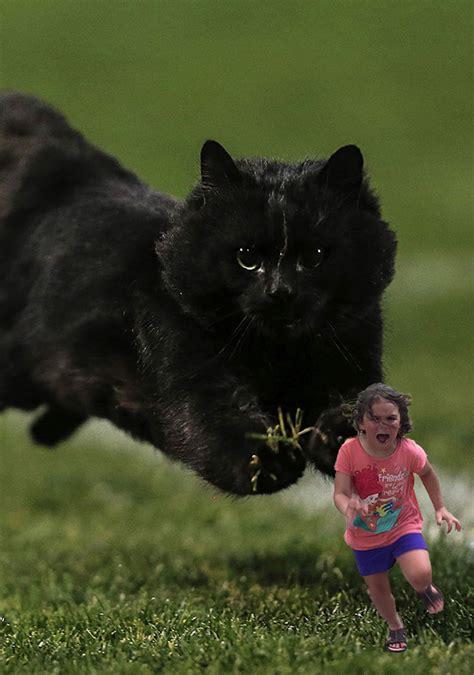 internet  crazy   cat interrupted  rugby