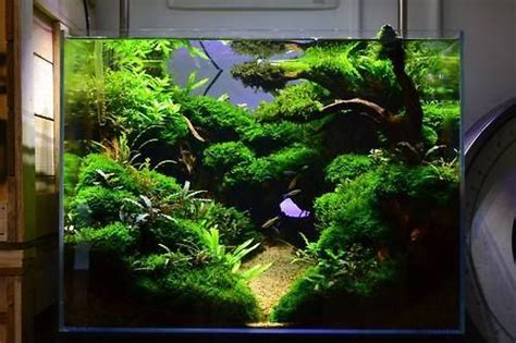 aquascape designs 50 aquascape aquarium design ideas meowlogy