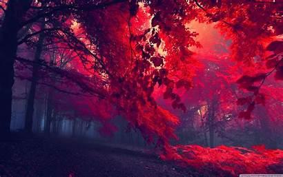 Forest 4k Wallpapers Desktop Dual Backgrounds Ultra