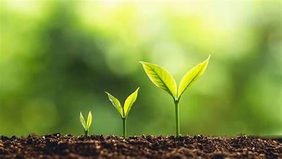 Growth Development Biology Form Study Notes Peruzinasi