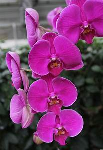 The Nature Of Orchids