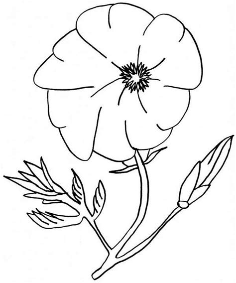 amazing poppy flower coloring page color luna