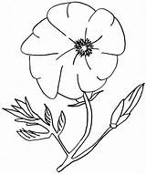 Poppy Coloring California Flower Amazing Pages Poppies Drawings Sheets sketch template