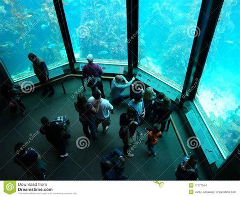het aquarium de baai monterey redactionele stock afbeelding afbeelding 17177344