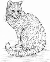 Coloring Pages Leopard Animals Wildlife Sitting Cat Adult sketch template