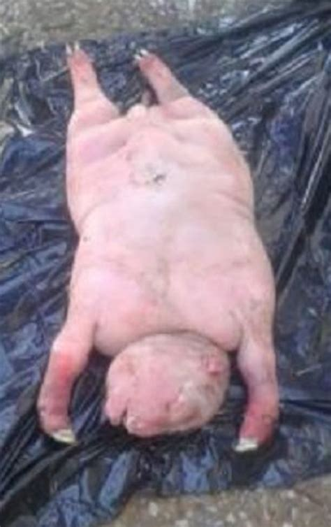 human  sheep creature terrifies villagers