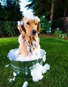 Laver Chien Savon Noir : shampoing chien fait maison avec des produits naturels ~ Melissatoandfro.com Idées de Décoration