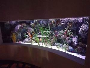 Tank Decor replicating habitats,original rock,coral