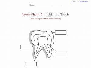 Health  Inside The Tooth Worksheet For 4th