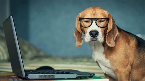 1920x1080 Beagle Funny Laptop Full Hd 1080p Hd 4k