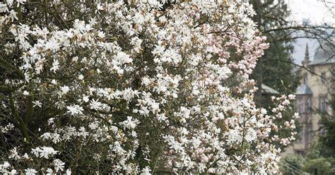 Ganzjahres Pflanzen by Attraktive Pflanzen F 252 R Winter Und Fr 252 Hling Mein Sch 246 Ner