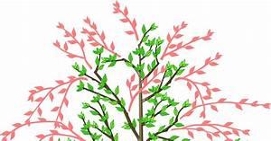 Kirschbaum Richtig Schneiden : sauerkirschen richtig schneiden mein sch ner garten ~ Lizthompson.info Haus und Dekorationen
