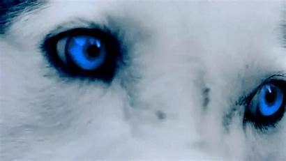 Wolf Eyes Werewolf Wattpad Gifs Dog Picsart