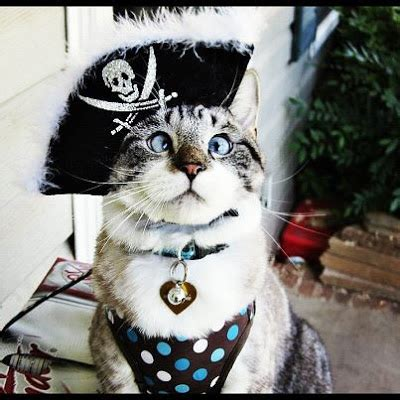 Who Wears Halloween Costumes Better Than Cats? NO ONE! - Cats vs Cancer