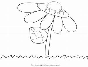 Ladybug Life Cycle Page Coloring Pages