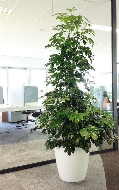 plantes de bureau acheter des plantes de bureau chez anygreen