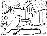 Coloring Bird Birdhouse Pages Printable Feeder Drawing Print Drawings sketch template