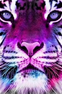 1000+ images about galaxy tigers on Pinterest | Tigers ...