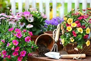 Pflanzen Für Balkon : balkon sch ne pflanzen f r jede jahreszeit ~ Sanjose-hotels-ca.com Haus und Dekorationen