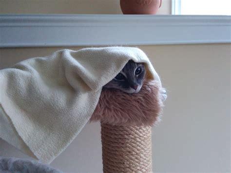 cat  hammock hiding  blanket animal