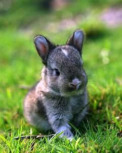 Cute wild baby rabbit ;) | Baby's rabbit | Pinterest | A ...