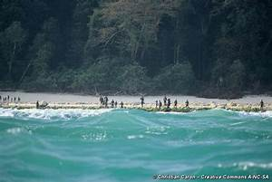 Pics For > North Sentinel Island Natives