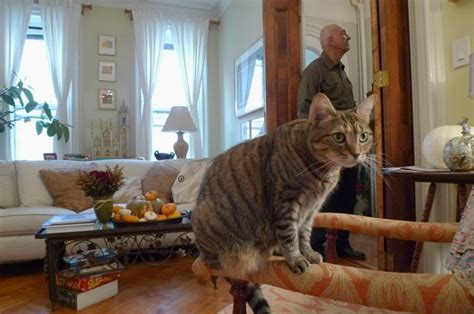The Living Room Or Not Cat by 20 Hilarious Pictures Of Cats Sitting On Chairs