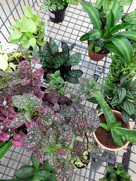 greenhouse   drill  ceramic pots