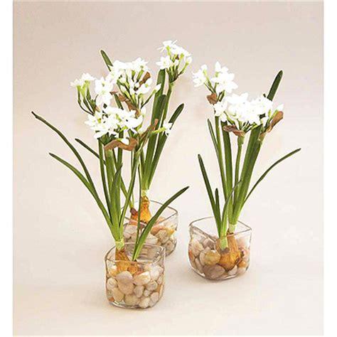 paperwhite narcissus bouquet
