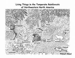 106 Best Ideas About Rainforest On Pinterest