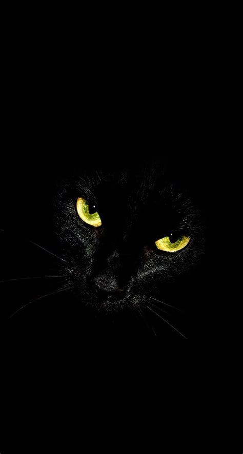 Aesthetic Cat Wallpaper Iphone by Black Cat Glowing Iphone Wallpaper Background